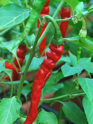 red_cayenne_pepper_pic.jpeg